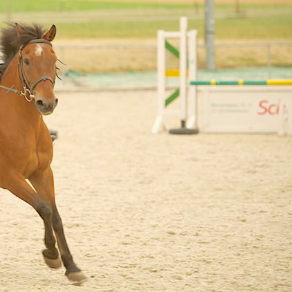 pony jumping, Springreiten
