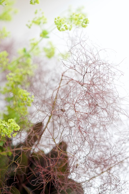 lady's mantle and smoke bush bouquet