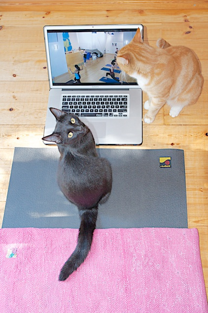 cats doing yoga, Katzenyoga
